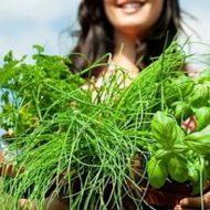 мочегонные травы
